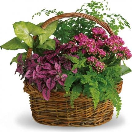 Cesta de flores Aromas del Campo