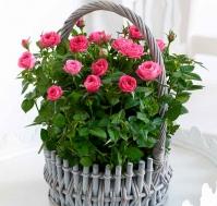 Cesta de rosas Sueños rosas