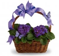 Cesta de violetas