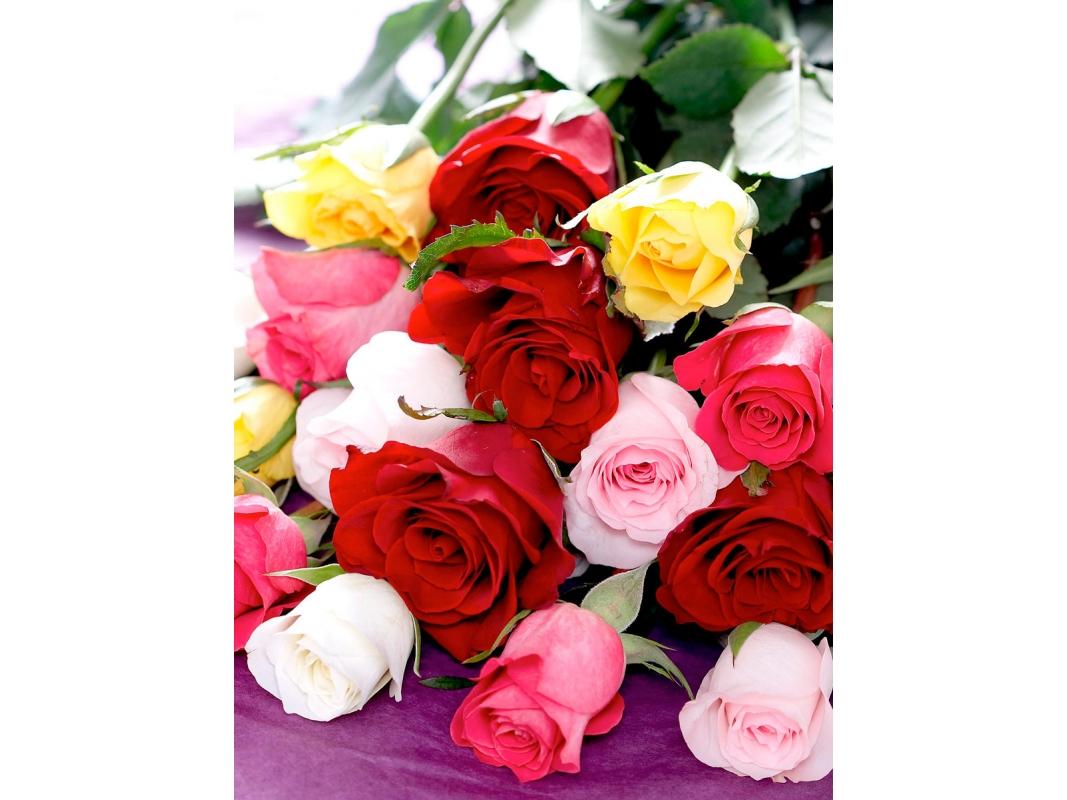 Fotos de ramo de rosas de colores 52